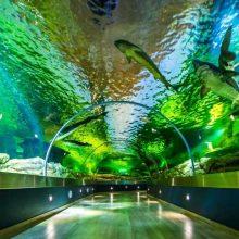 Lietuvos jūrų muziejuje garsūs menininkai kuria parodą