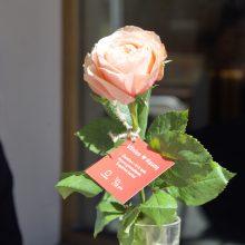 Vilniaus dovana Kaunui 612-ojo gimtadienio proga – tiek pat bijūnų žiedų