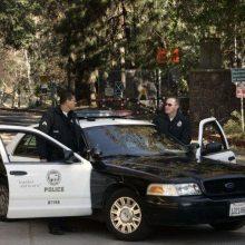 Kalifornijoje ant automobilio užgriuvus didžiulei sekvojai žuvo penkių vaikų tėvai