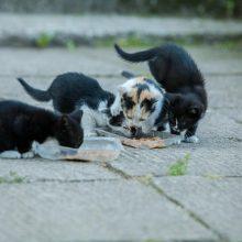 Dėl beglobių kačių – nerimas