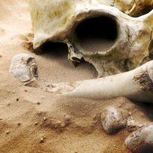 Vilniuje prie namo aptikta žmogaus kaulų