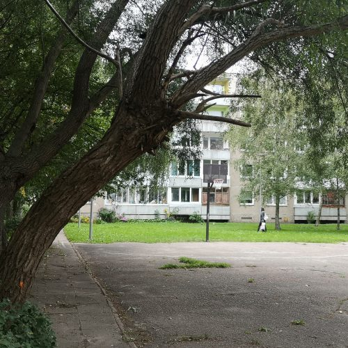 Klaipėdos daugiabučių namų kieme pavojus dėl medžių: žmonės baiminasi nelaimių  © Vytauto Liaudanskio nuotr.