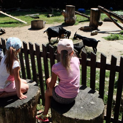 Zoologijos sodas prieš rekonstrukciją.  © Laimučio Brundzos nuotr.