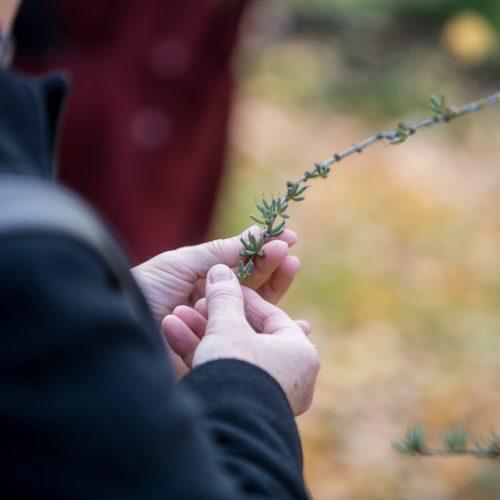 Derliaus šventė VDU botanikos sode  © Vilmanto Raupelio nuotr.