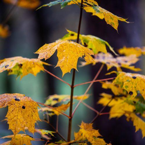 Auksinis ruduo sostinėje  © I. Gelūno / Fotobanko nuotr.