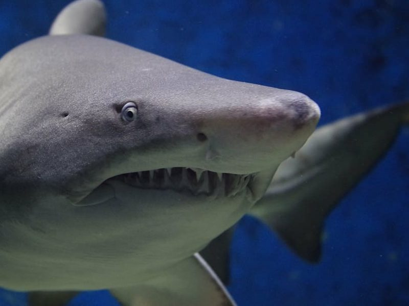 Raudonojoje jūroje Egipte ryklys sužalojo turistę