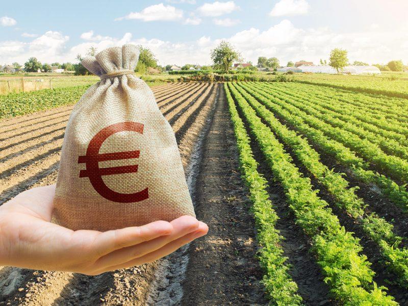 ŽŪM: didelis praėjusių metų derlius nesumažino supirkimo kainų