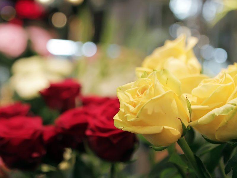 Rugsėjo 1-osios atgarsiai Klaipėdoje: gėlių pardavėjai šventę nurašė?