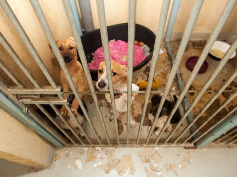 Iš Vynupės kaimo paimta dvylika neprižiūrimų šunų: nešerti gyvūnai ėsdavo paukščių išmatas