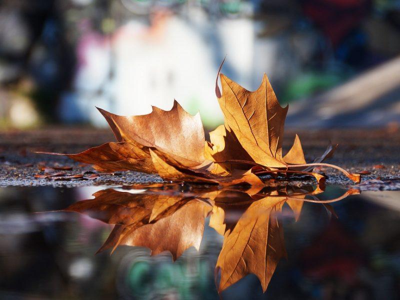 Artimiausiomis dienomis – drėgni orai ir gūsingas vėjas, gali net kilti audra