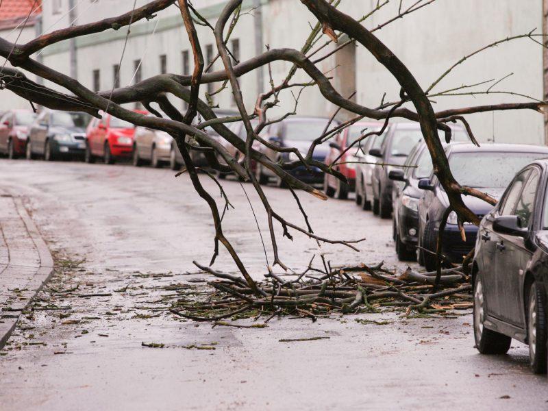 Įspėja: po audros ant kelių gali būti nuvirtusių medžių ar nukritusių šakų