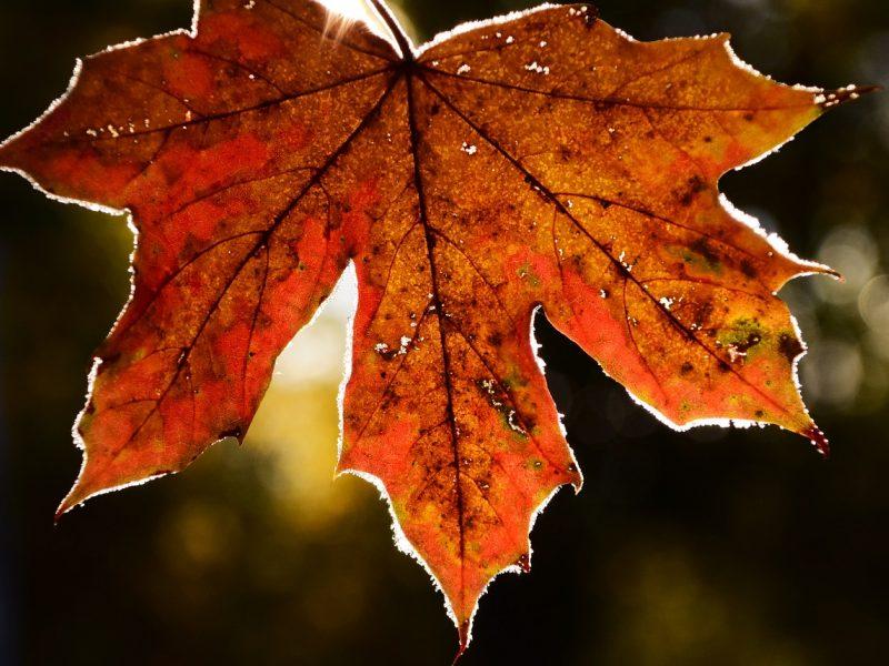 Orai: į Lietuvą brausis rudeniška vėsa, naktimis – šalnos