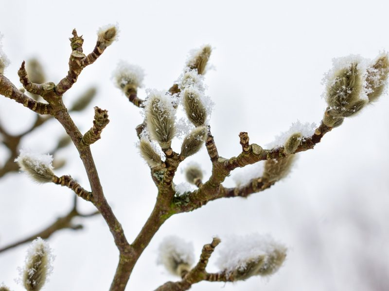 Orai: savaitgalis bus pavasariškas, bet labai vėjuotas
