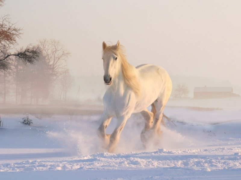 Orai: žiema parodys, ką moka – šėls pūgos, stipriau atšals