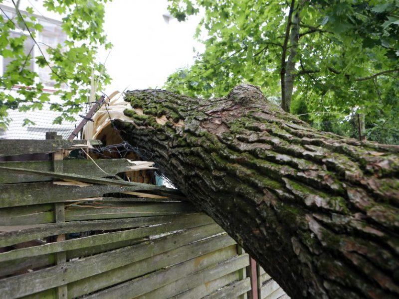 Per parą 118 kartų vykta šalinti nuvirtusių medžių: daugiausiai – Kauno apskrityje