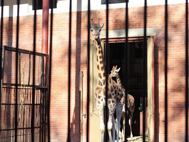 Prieš uždarymą dar galima aplankyti zoologijos sodo gyvūnus