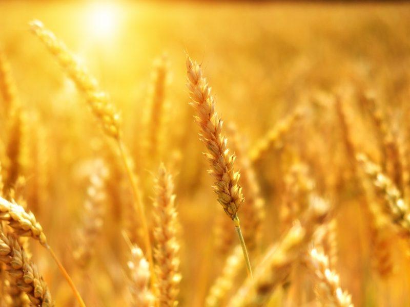 G. Nausėda siūlys nustatyti tiesioginių išmokų lubas ūkininkams