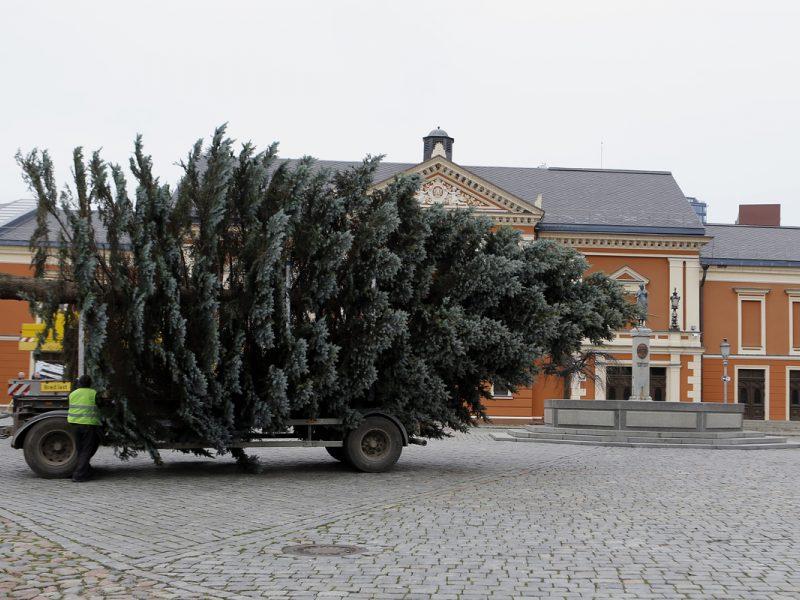 Skelbiama Klaipėdos Kalėdų eglutės paieška