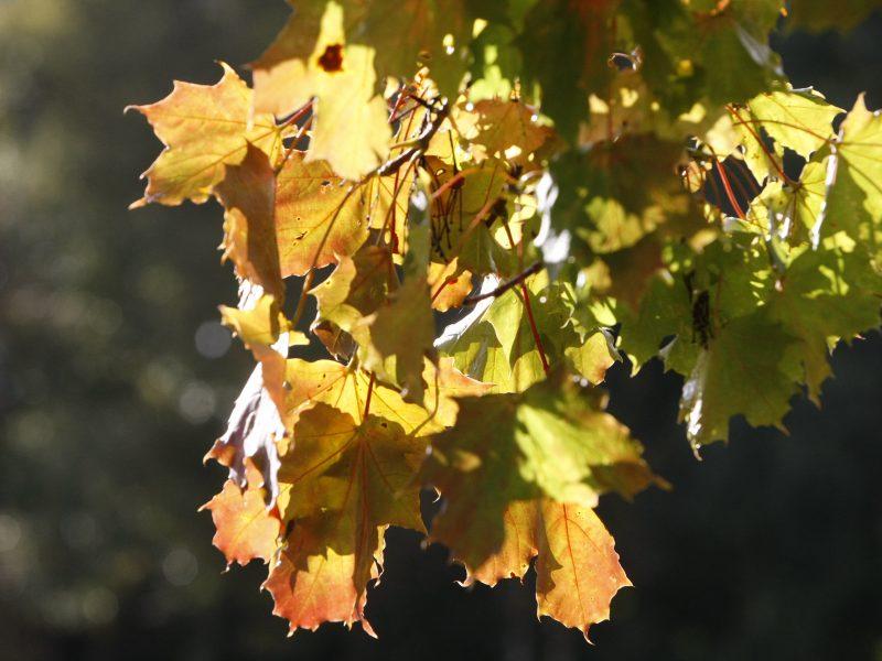 Orai leis mėgautis rudeniu
