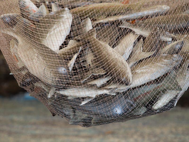 Danai į žuvų ūkį jūroje prie Klaipėdos planuoja investuoti 20 mln. eurų