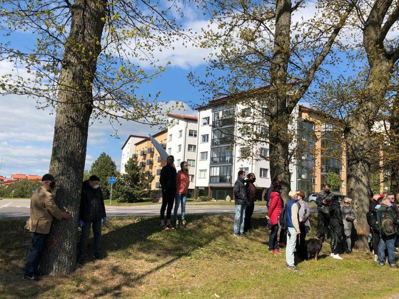 Klaipėdiečiai dainomis ir parašais siekia išsaugoti Tauralaukio ąžuolus