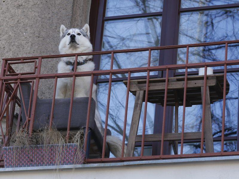 Ilgieji savaitgaliai – darbymetis vagims: juos atbaidyti gali kaimynai, šunys
