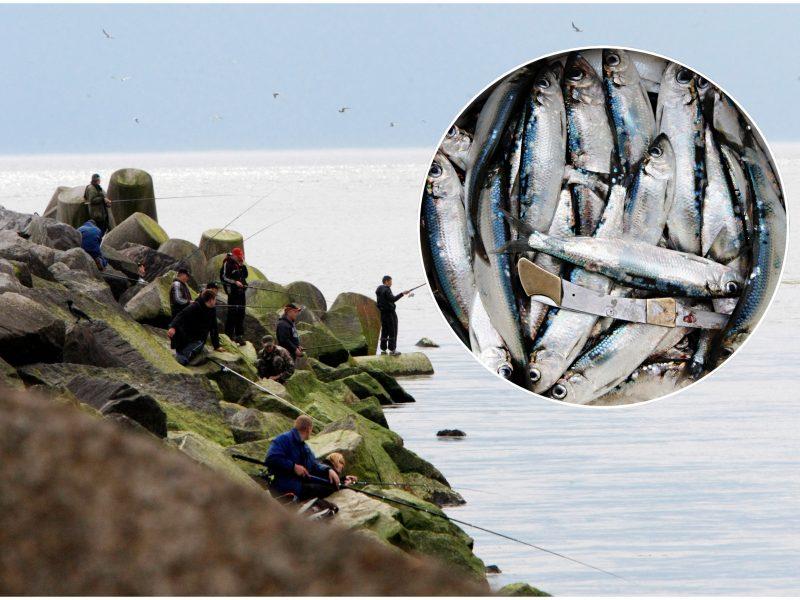 Klaipėdos žvejai žvangina tuščiais kibirais