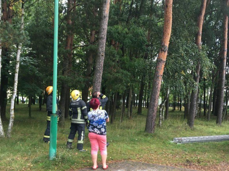 Nidoje ugniagesiams teko iš medžio iškelti vaiką