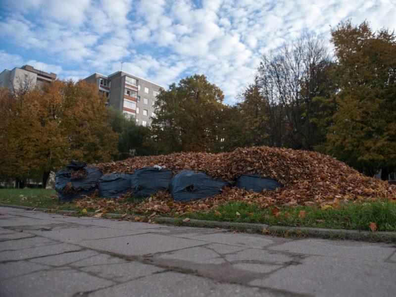 Informacija dėl žaliųjų atliekų tvarkymo Klaipėdoje