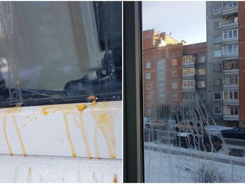 Incidentas Klaipėdoje: dėl trispalvės – kiaušiniu į langą?