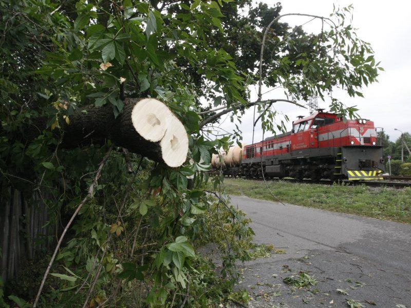 Ugniagesiai per praėjusią parą 71 kartą vyko šalinti nuvirtusių medžių