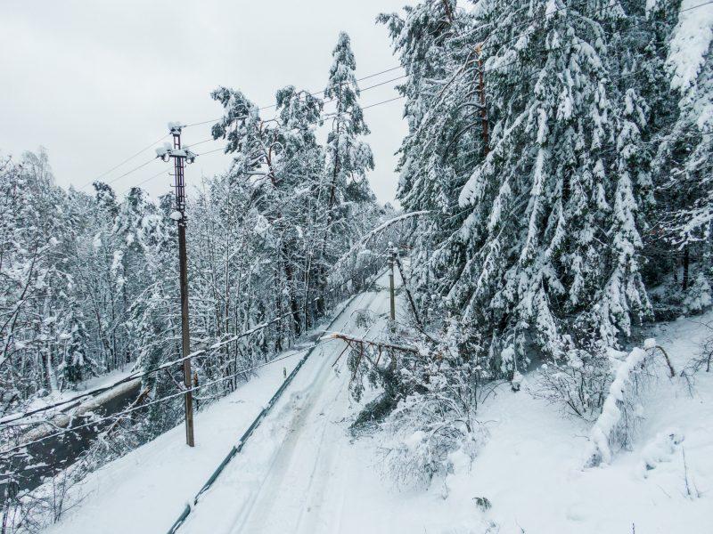 Atgarsiai po gausaus sniego egzamino: kirsti mišką? Tiesti kabelius? Nezyzti?