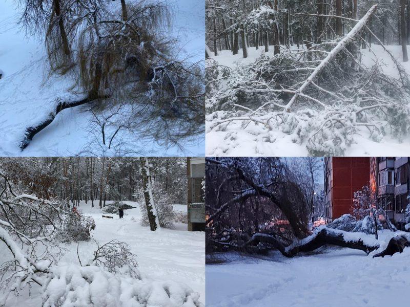 Neatlaiko snieguotų oro sąlygų: šalinti nuvirtusių medžių ugniagesiai vyko 203 kartus