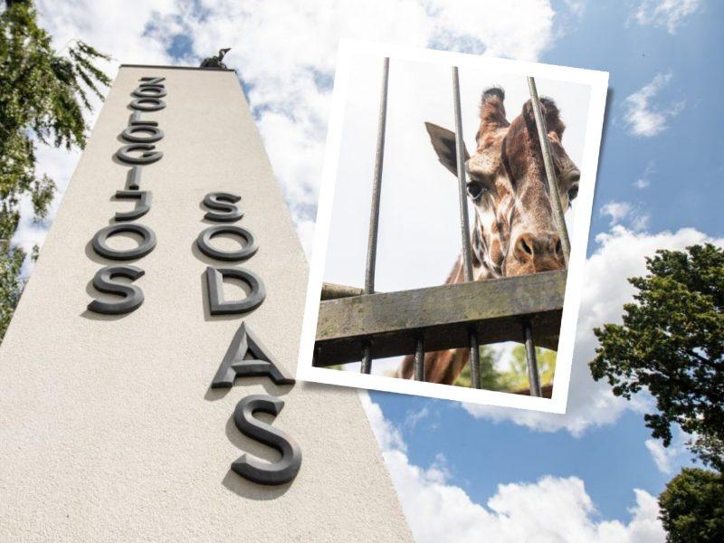 Šmaikštus Lietuvos zoologijos sodo požiūris į renovaciją: gyventojams kyla kotedžų pamatai