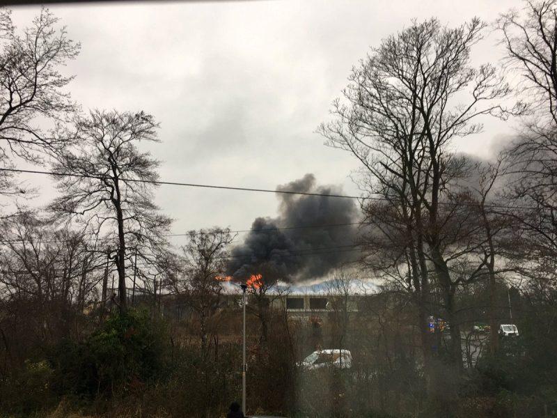 Britanijoje per gaisrą zoologijos sode evakuoti lankytojai