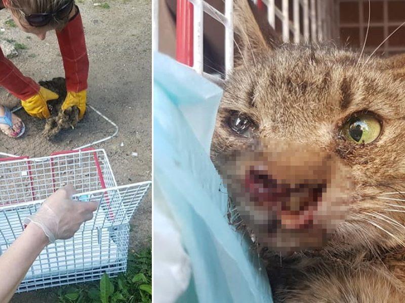 Jauno gyvūno kančios studenčių nesujaudino: šaipėsi ir rodė nepadorius gestus