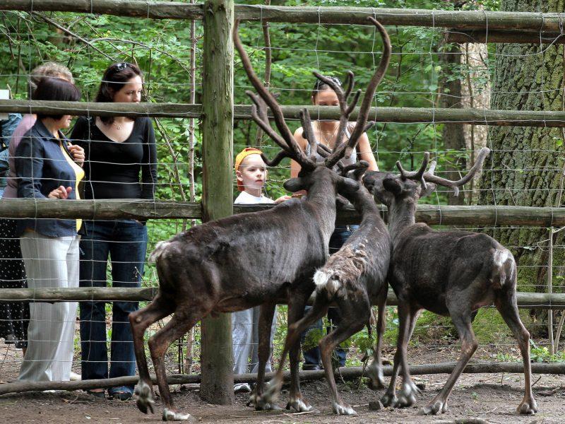 Dėl stipraus lietaus savaitgalį neveiks dalis Lietuvos zoologijos sodo