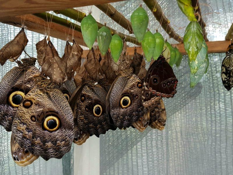 Botanikos sode – atogrąžų drugių paroda
