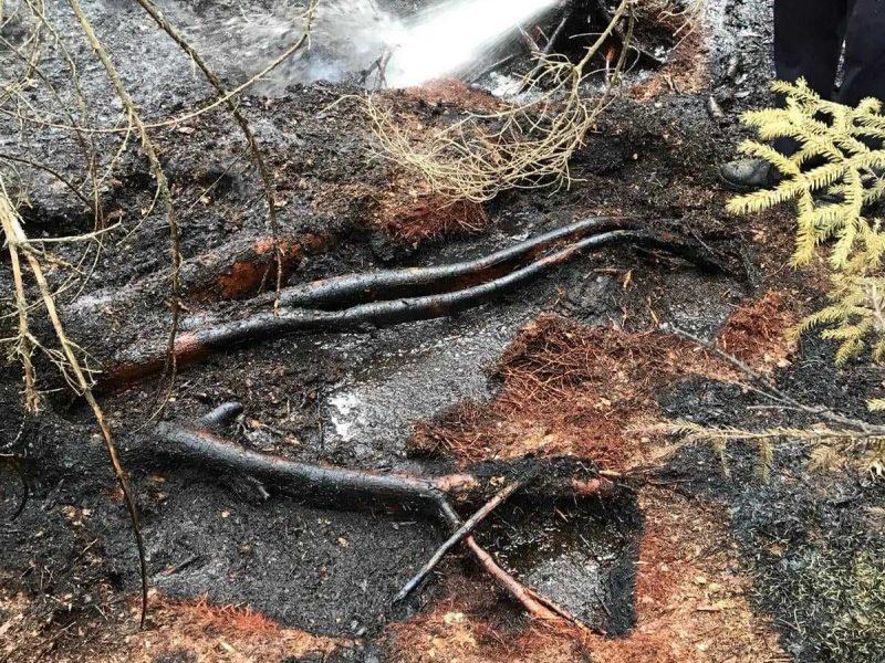 Miško gaisravietėse miškininkai ir ugniagesiai budi ir naktimis
