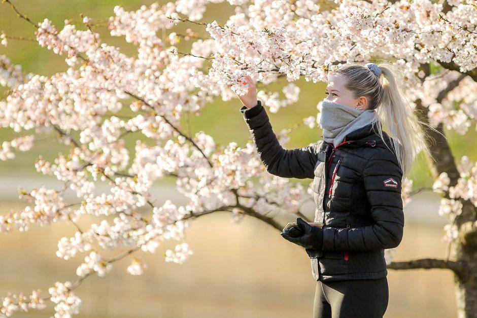 Sakura hipertenzijai, hipertenzija epidurinėje erdvėje