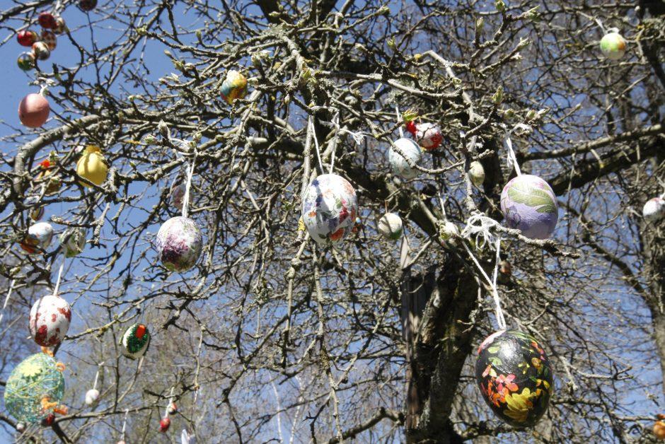 Kūdikių namuose pražydo Velykų medis