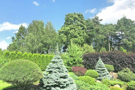 Birželį kieme ir sode – pats darbymetis