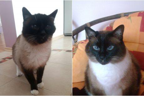 Lizarijus – seniausias katinas Klaipėdoje?