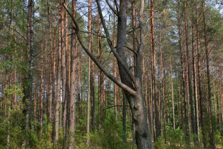 Klaipėdos rajone dega miškas